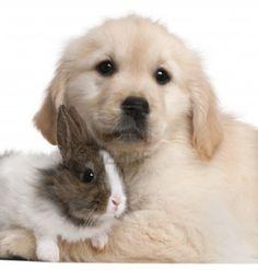 Fond d cran de chats et chiens wallpapers - Golden retriever gratuit ...