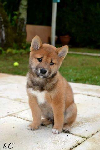 Fond d cran de chien qui bouge wallpapers - Image bebe chien ...