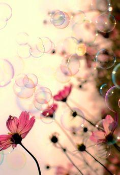 Fond D Ecran Iphone 5 Fleur Wallpapers