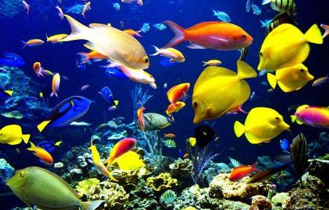 fond d 233 cran pc aquarium anime gratuit wallpapers