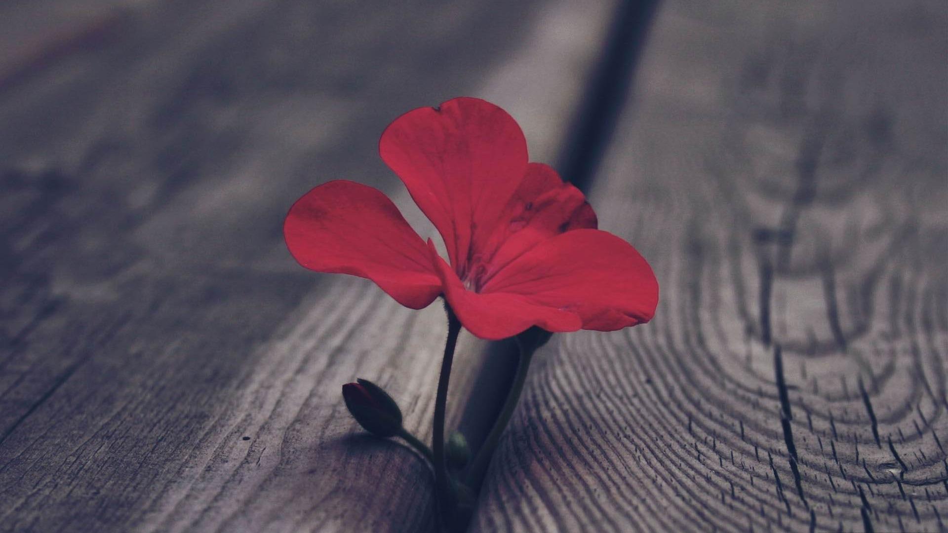 Fond D Ecran Rouge Et Noir Wallpapers